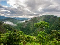 Bwindi Impenetrable National Park landscape