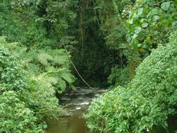 Bwindi Impenetrable National Park small river through jungle