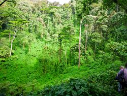 Bwindi Impenetrable National Park trekking the jungle