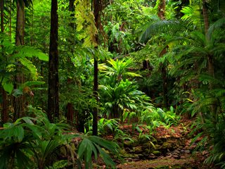 20210208150108-Daintree Rainforest National Park dense foliage.jpg