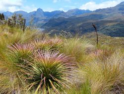 El Cajas National Park vegetation and landscape