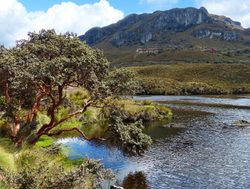Lake Toreadora in El Cajas National Park