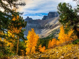 20210214160536-Great Basin National Park fall foliage.jpg