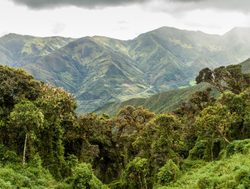 Jungle landscape in Podocarpus National Park Ecuador
