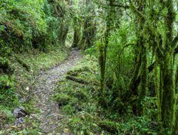 Serene trail in Podocarpus National Park