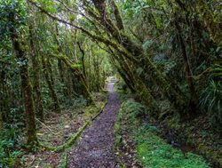 Trail in Podocarpus National Park Ecuador