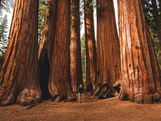 Sequoia National Park.jpg