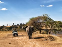 Serengeti National Park elephant with vehicle