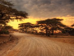 Serengeti National Park sunset over the road