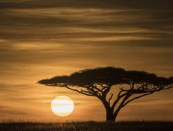 Serengeti National Park sunsetting