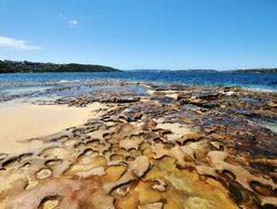 Sydney Harbor National Park beach and shoreline