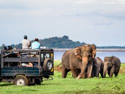 Yala National Park elephant viewing