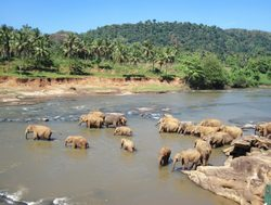 Yala National Park elephants in the river